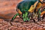 Green bug far
