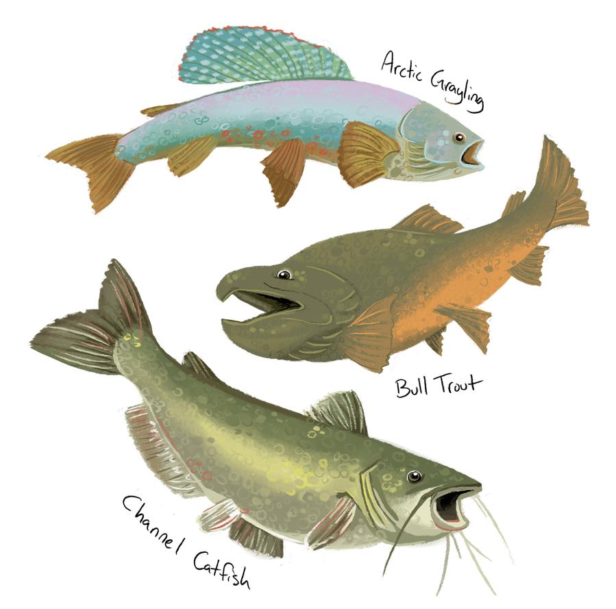Gift Montana River Fish By Katiepox On Deviantart