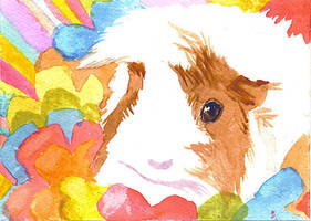 guinea pig fun 2 by bamboleo
