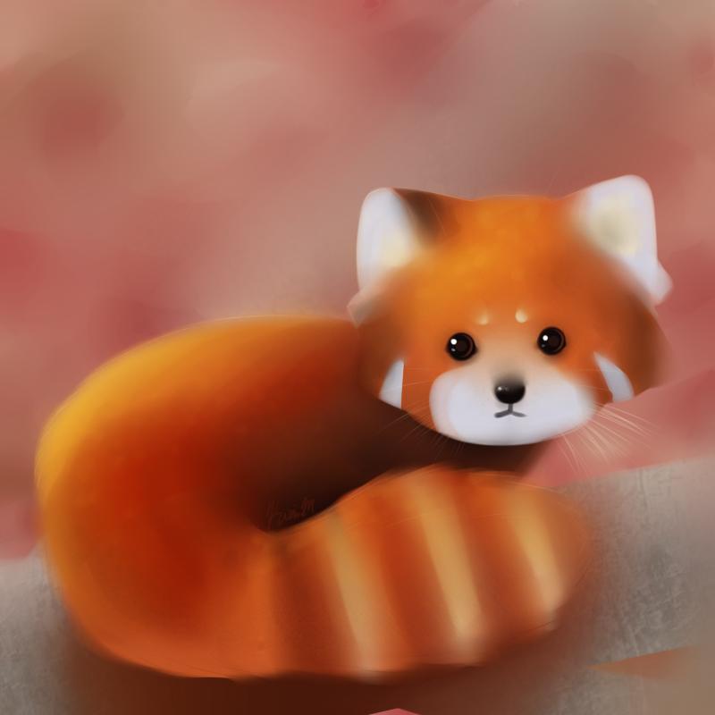 Red Panda By Dragaton On Deviantart