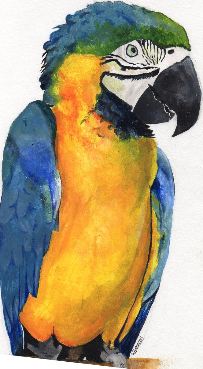Parrot- better quality by beckhammond