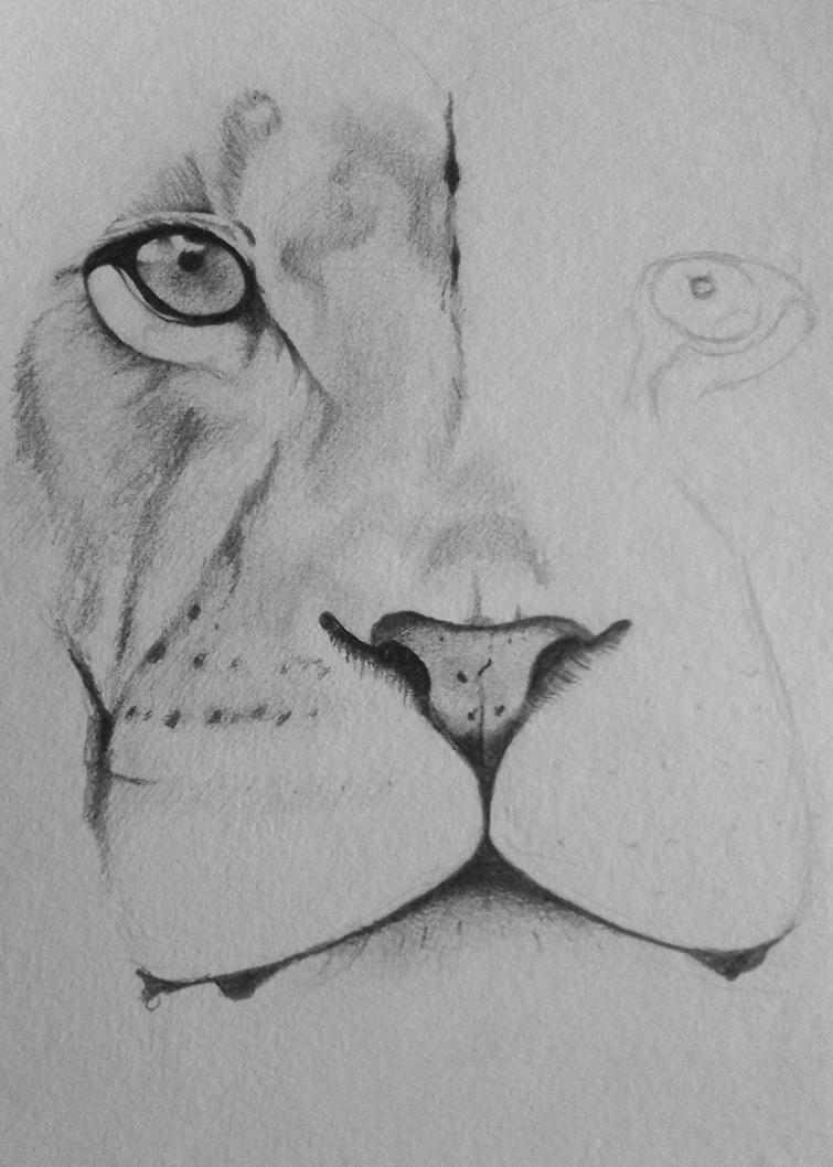 WIP- Lion by beckhammond