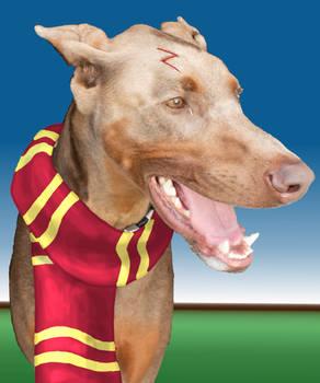 Potter Pup