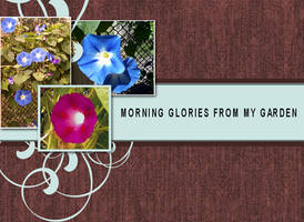 Morning Glories by noema-13