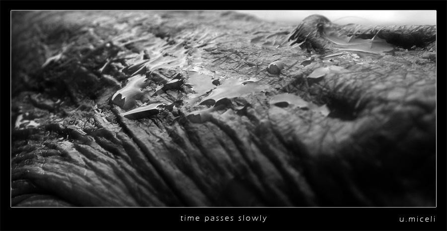 time passes slowly by joeyramone76
