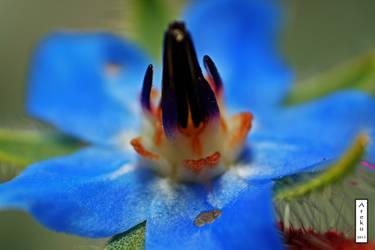 Florecilla azul
