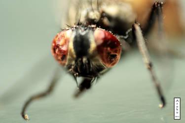 Dead fly by arekusan