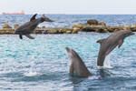Dolphins... yay!