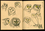 Owl Sketches 03
