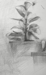 A plant by aw26