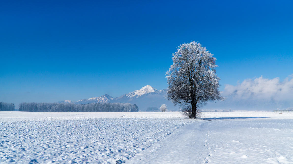 Solitary tree by andreypavlin