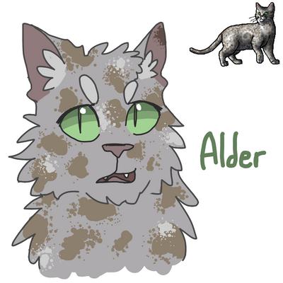 #6 - Alder by SpeckledCactus