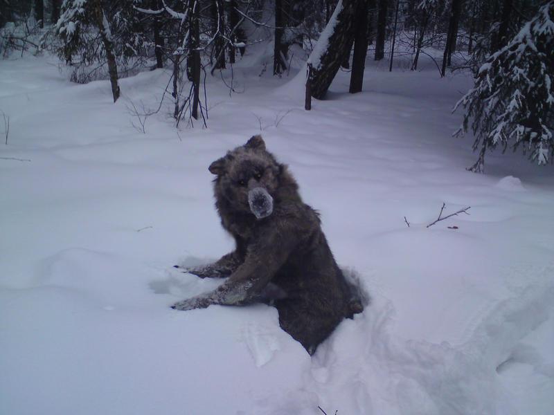 Realistic werewolf costume - photo#19