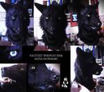 My Nachtzeit wolf mask