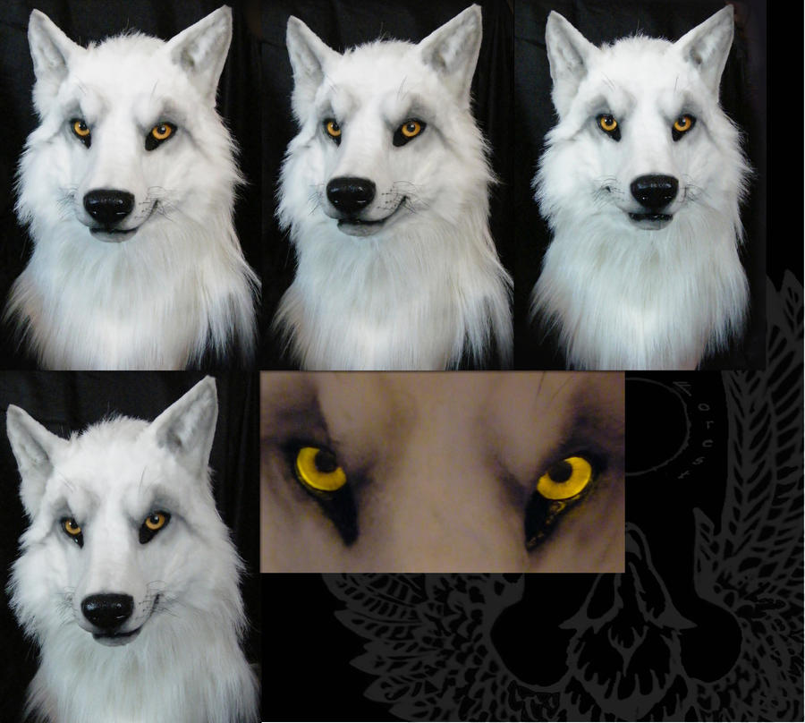 Second white wolf male head by SnowVolkolak