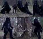 Black Wolf Nachtzeit rebirth. Leader of the pack by SnowVolkolak