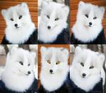 Arctic fox Meepha