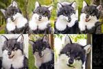Wanderer wolf