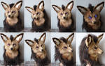 Fennec Flying Fox Ariia