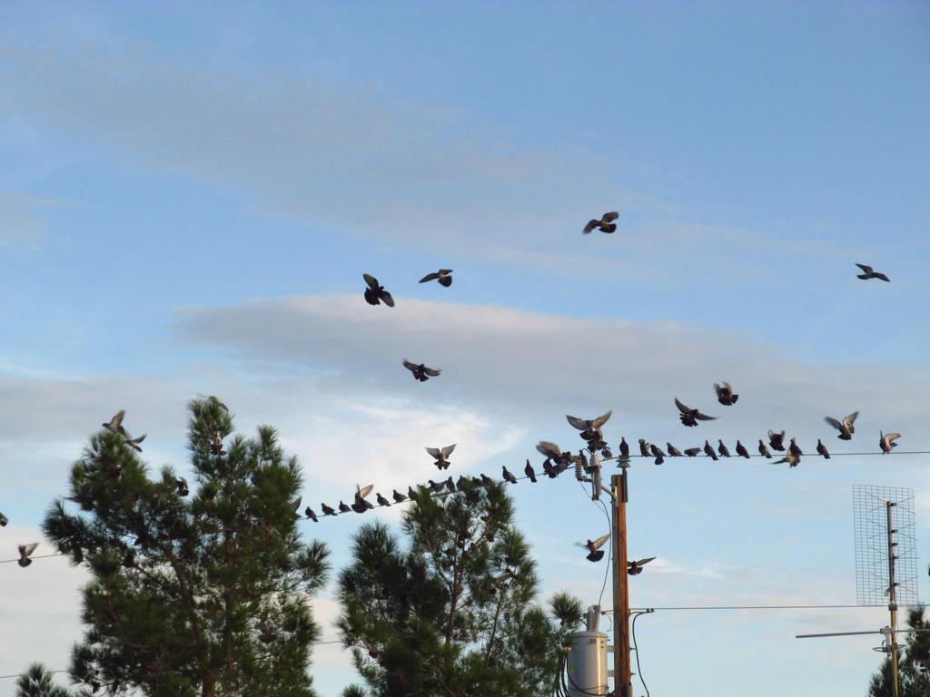 Birds Landing by PunkyDoodle96