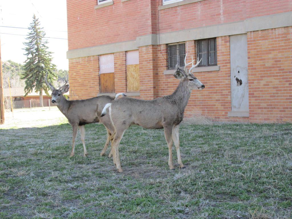 Deer by PunkyDoodle96