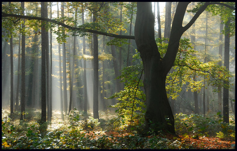 Lightthought 490 by lightthinker