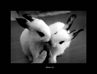 Bunnies by gennia