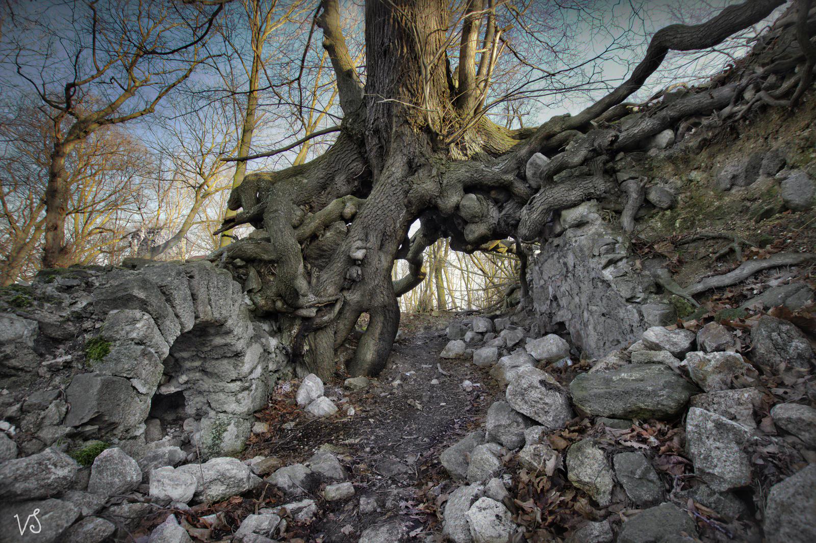 Lauenburg 2 by Capricornus60