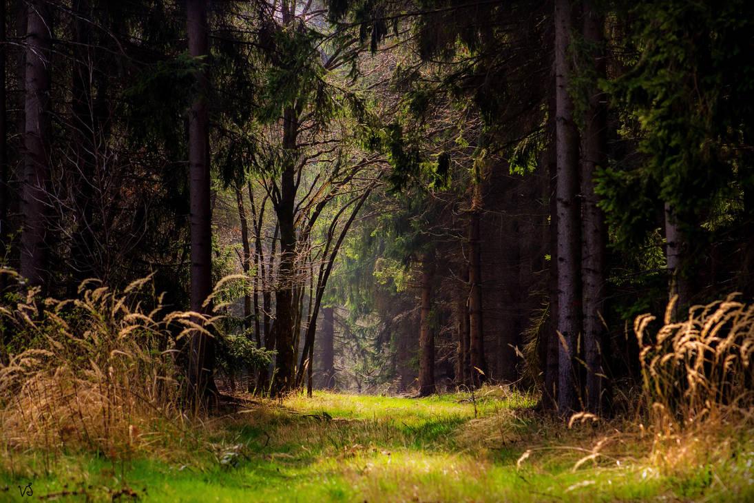 Harzwald 2 by Capricornus60