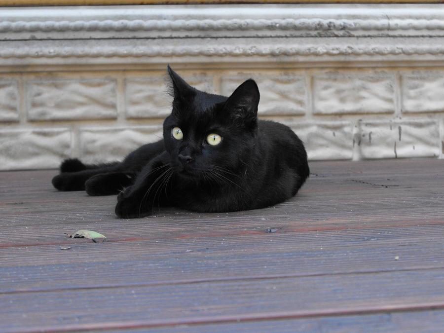My Cat Pablo 2