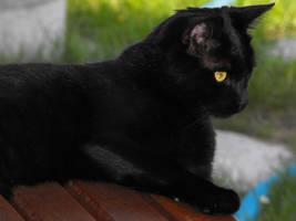 My Cat Pablo 4