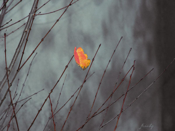 simple autumn leaf