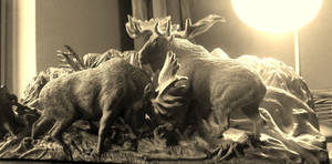 Moose bull fighting in black and white