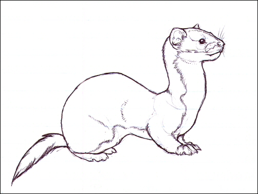 Solitary Weasel by nikkiburr on