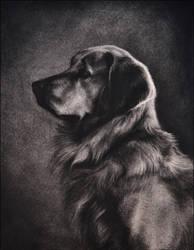 Bailey - Golden Retriever by nikkiburr
