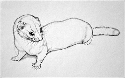 A Smaller Weasel