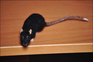 Needlefelted Rat - Brackle by nikkiburr