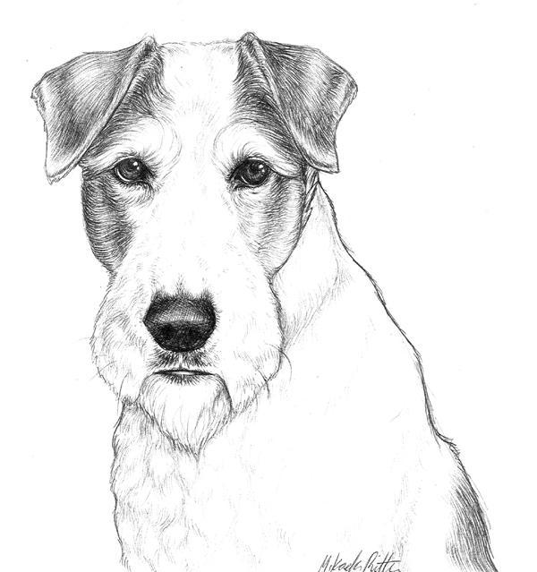 nikkiburr - Wire Fox Terrier by nikkiburr on DeviantArt