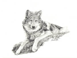 nikkiburr - Wolf on a Log by nikkiburr
