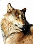 Michelle's Wolf