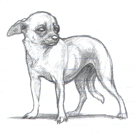 Realistic Chihuahua Coloring Pages Coloring Pages