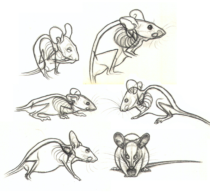 Studies of See Through Mice by nikkiburr on DeviantArt