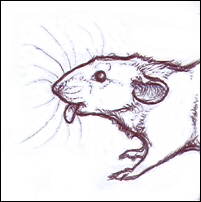 Rat Tongue by nikkiburr
