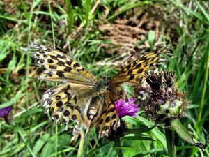 Torn Butterfly In Spiky World