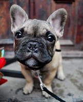 The dog by Szeriana