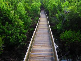Same path, Same destination. by Wonderglass