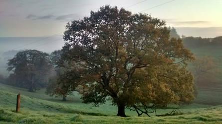 mist.... by notsowelltrodenpaths