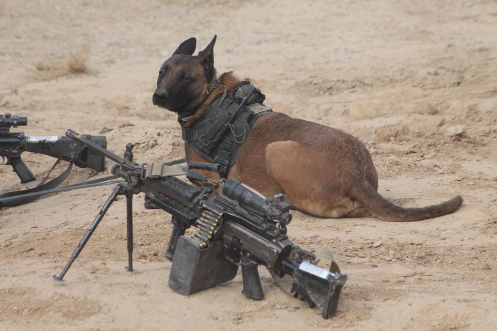 Image Result For Dog Training Johnson