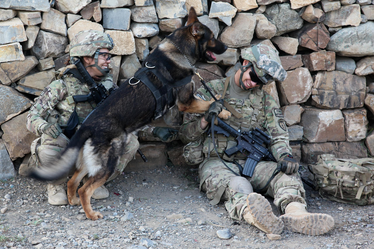 Military dog airborne - photo#9
