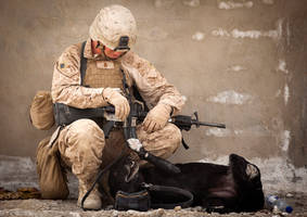 IED Detection Dog by MilitaryPhotos